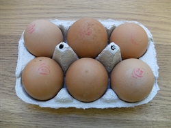 Picture of 6 Large Eggs