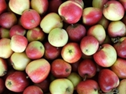 Picture of Winter Fruit Box 2kg (approx 8-12 pieces of fruit)
