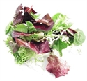 Picture of Mixed Spring Salad, Organic (125g)