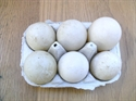 Picture of Duck Eggs x 6