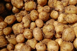 Picture of Gatesby White Potatoes