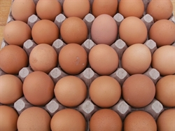 Picture of 30 x Large Eggs