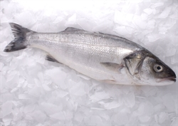 Picture of Whole Wild Sea Bass