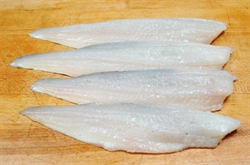 Picture of Catch of the Week (apx 400g - £16 / kg)