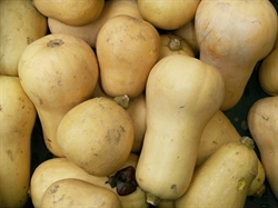 Picture of Butternut Squash