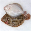 Picture of Whole Brill (apx. 750g - £15 per kg)