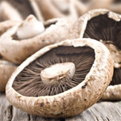 Picture of Norfolk Flat Field Mushrooms
