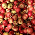 Picture of Ida Red Apples (500g)