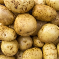 Picture of Maris Piper Potatoes (1kg)
