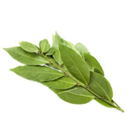 Picture of Fresh Bay Leaves, (bunch)