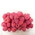 Tiptree Raspberries