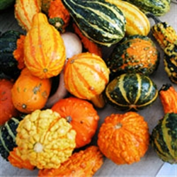 Picture of Mixed Squash Selection (apx. 3kg)