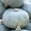 Picture of Crown Prince Squash 1/2 (approx 1.6kg - £1.50/kg )