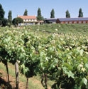 Picture for category Three Choirs Vineyard