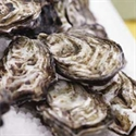 Picture for category Rock Oysters