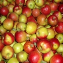 Picture of Jonagold Apples (500g)