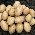 Picture of Valour Potatoes (1kg)