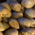 Picture of American Hard Shell Clams 500g