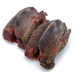 Picture of Whole Woodpigeon x 1 (approx 300g)