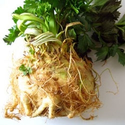 Picture of Small Celeriac (approx 400g)