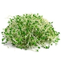 Picture of Organic Alfalfa Sprouts (115g)