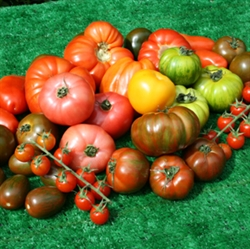 Picture of Mixed Heirloom Tomatoes (400g @ £8 / kg)