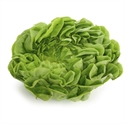 Picture of Spring Green Lettuce