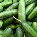 Picture of Mini Cucumber