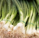 Picture of Spring Onions (bunched)