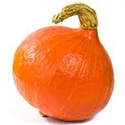 Picture of Onion Squash