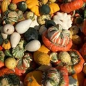 Picture of Mixed Squash Selection (approx 2.9kg)