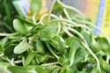 Picture of Organic Sunflower Sprouts (100g)