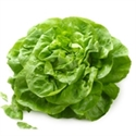 Picture of Green Winter Lettuce