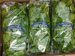 Picture of Chalke Valley Watercress (100g)