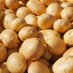 Picture of Charlotte Salad Potatoes