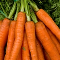 Picture of Carrots, bunched (approx 10-12, 550g)