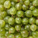 Picture of Gooseberries (approx 227g)
