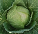 Picture of Round Green Cabbage