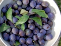 Picture of Fresh Maldon Sloes (450g)