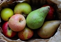 Picture for category Fruit Boxes