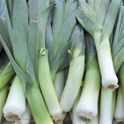 Picture of Leeks (500g @ £2.90 / kg)