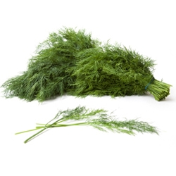 Picture of Fennel Ferns (30g)