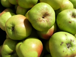 Picture of Bramley Apples