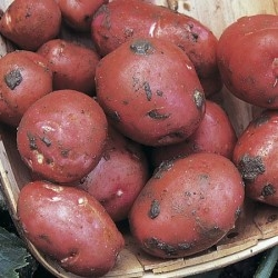 Picture of Rudolph Potatoes