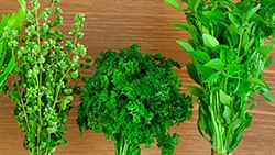 Picture of Fresh Herb Selection (approx 3 x 40g)