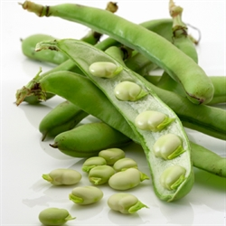 Picture of Broad Beans