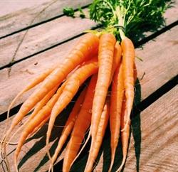 Picture of Baby Carrots, bunched (apx 14 head)