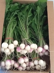 Picture of Baby Purple Top Turnips, Bunch (approx. 250g)