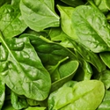 Picture of New Season Summer Spinach BIG BAG (500g)