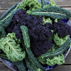 Picture of Mixed Spring Kale (225g)